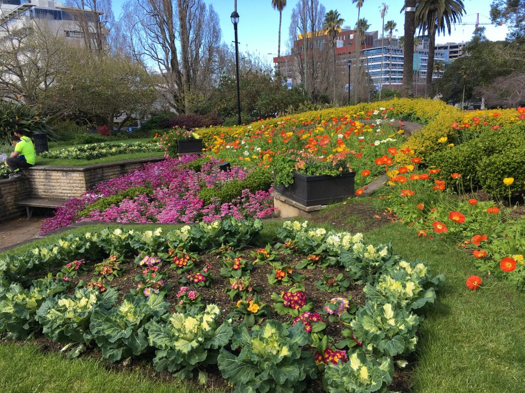 Albert Park in Auckland | International Hotdish