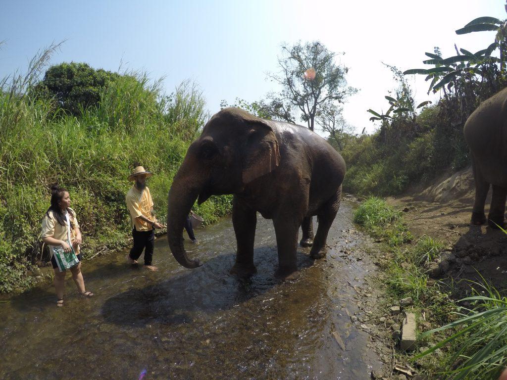 walking with elephants in stream - International Hotdish
