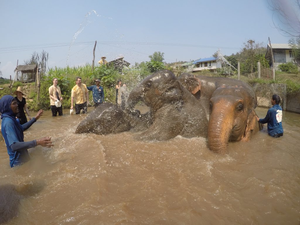 Elephant water fight in pool - International Hotdish